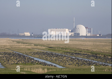 barnacle goose (Branta leucopsis), flock, in the background power station Brokdorf, Germany, Schleswig-Holstein, - Stock Photo