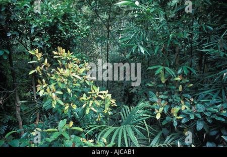 Tropical vegetation on the slopes of Gunung Batukau central Bali - Stock Photo