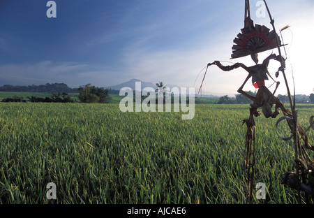 Rice fields at dawn Gunung Batukau in the distance Inland of Yeh Gangga Bali Indonesia Rice Goddess Dewi Sri offering - Stock Photo