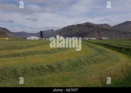 Newly mown hayfield on a farm at Laxardalur near Hofn in the East Fjords region of eastern Iceland - Stock Photo