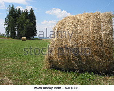 Straw bale on the field - Stock Photo