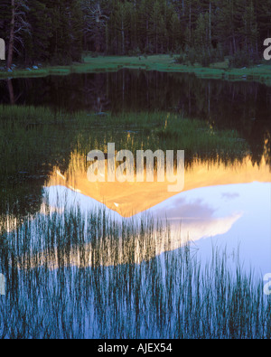 Reeds and reflections in mountain tarn at sunset along Tioga Pass road - Stock Photo