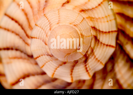 Spiral sea shell - Stock Photo