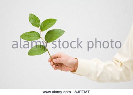 Person holding a branch - Stock Photo