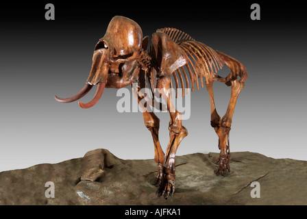 Columbian Mammoth Pleistocene Ice Age Platte River Colorado - Stock Photo