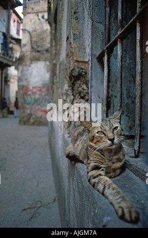 Domesticated cat comfortably perched on the window sill outside a house in old Stone Town Zanzibar Tanzania East - Stock Photo
