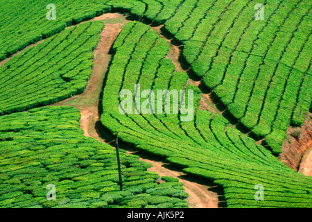 The winding roads adding to the beauty of the tea plantations in Munnar, Kerala, India - Stock Photo