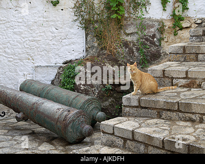 CAT ON STEPS WITH TWO CANON THAT ARE AT ENTRANCE TO MARMARIS CASTLE TURKEY - Stock Photo
