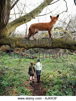 Fox watching children walking in the woods - Stock Photo