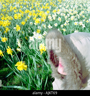 Woman in field of daffodils - Stock Photo