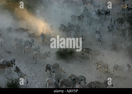 Herd of zebras in a dusty river bed with a beam of sunlight - Stock Photo