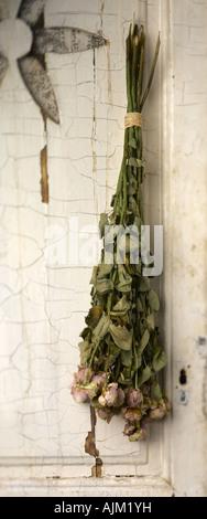 Drying bunch - Stock Photo