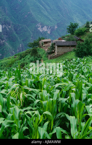Field and village of Walnut Grove in Tiger Leaping Gorge, China - Stock Photo