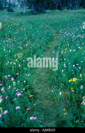 Beaten path through wildflower meadow Rocky Mtn Nat l Park CO - Stock Photo
