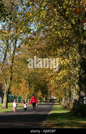 Tree-lined avenue in Lurgan Park, County Armagh, Northern Ireland - Stock Photo