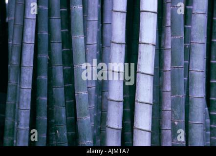 Bamboo Japan horizontal  - Stock Photo