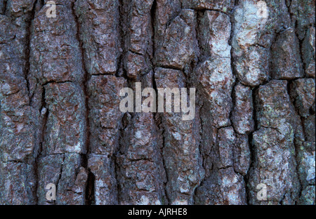Common Oak Bark England UK - Stock Photo