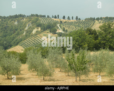 Tuscan summer landscape near Volterra - high end Hasselblad 61mb digital image - Stock Photo