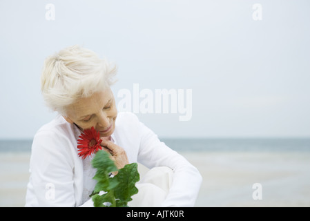 Senior woman holding up gerbera daisy to face, ocean in background, head and shoulders - Stock Photo