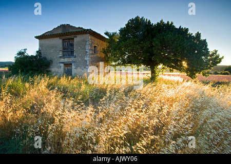 France Provence Vaucluse region stone building in field at sunrise - Stock Photo