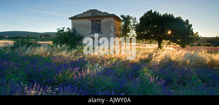 France provence Vaucluse region stone building in lavender field - Stock Photo