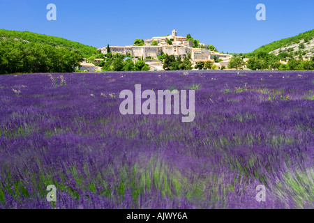 Hilltop village of banon viewed over Lavander Provence France - Stock Photo