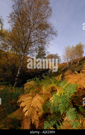 Glen Lyon in autumn with glowing slopes of bracken and birch trees in a variety of autumn colours Perthshire Scotland - Stock Photo