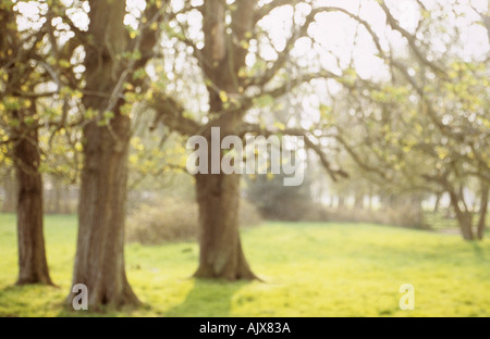 Horse chestnut or Aesculus hippocastanum trees in park in early spring - Stock Photo