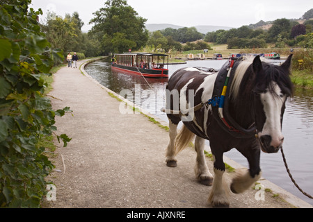 Horse drawn narrow boat on Llangollen Canal with horse on tow path Llangollen Denbighshire North Wales - Stock Photo