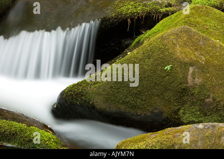Mossy cascade in Roaring Fork stream, Great Smoky Mountains National Park, Tennessee, USA - Stock Photo