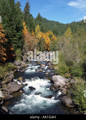 An autumn color change of Bigtooth Maple trees in the Cascade Mountains near Oakridge Oregon - Stock Photo