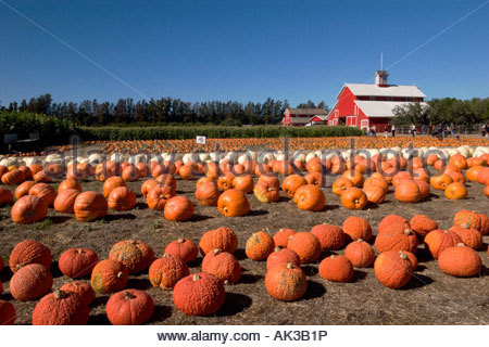 Faulkner Farm Pumpkin Patch Santa Paula California - Stock Photo