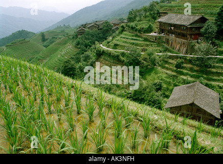View of Longji Rice Terrace fields, also known as the Dragon's Backbone, with Ping'An village in the background - Stock Photo