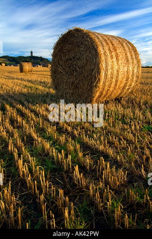 Hay bails at Scrabo Tower, Newtownards - Northern Ireland. - Stock Photo