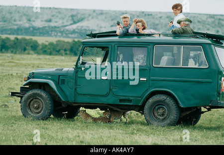 Young cheetah cubs playing underneath a Toyota Landcruiser on a game drive in the Masai Mara National Reserve Kenya - Stock Photo