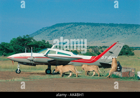Three lions close to a two engined light aircraft on bush airstrip in the Masai Mara National Reserve Kenya East - Stock Photo