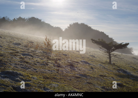 Dense fog on Watlington Hill. Oxfordshire. Chilterns. England. United Kingdom. Great Britain. - Stock Photo