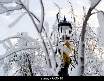 Snow covered lamp framed by tree's in Niagara Falls. - Stock Photo