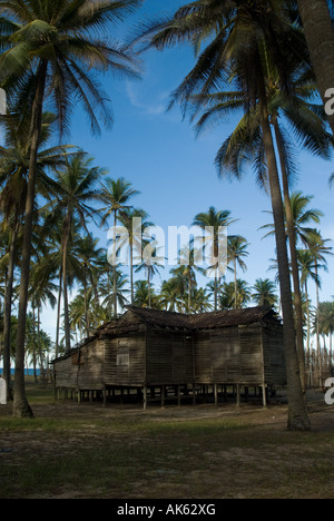 Old wooden hut by the among hundreds of coconut palms - Stock Photo