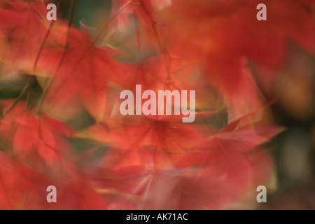 Autumn leaves blowing in wind Stock Photo