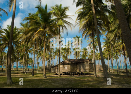 A wooden house among coconut trees. - Stock Photo