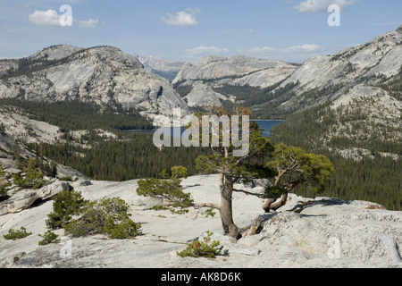 Tenaya Lake at Tioga Road, USA, California, Yosemite National Park - Stock Photo