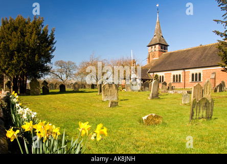 Daffodils at St Mary's Parish Church in the Village of Whitegate, Cheshire, England, UK - Stock Photo