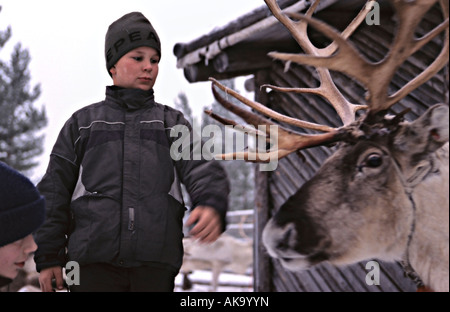 Reindeer farm in Finland - Stock Photo