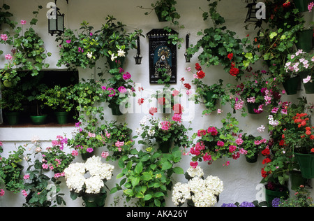 ... Cordoba Patio Festival Spain Pelargoniums In Painted Wall Pots Around  Front Door   Stock Photo