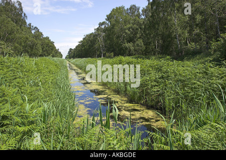 Drainage dyke in Holme Fen nature reserve which is the lowest point in Britain lying at the westerly end of East - Stock Photo