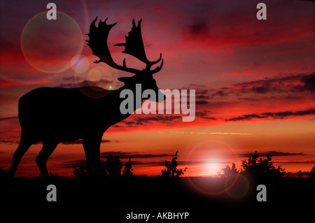 Silhouette of stag against sunset - Stock Photo