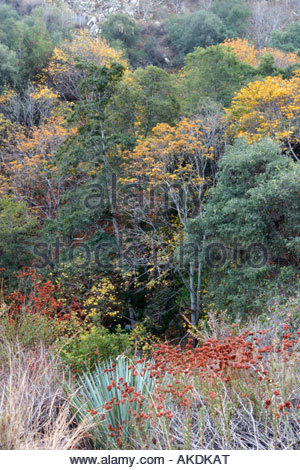 Big Santa Anita Canyon San Gabriel Mountains California - Stock Photo
