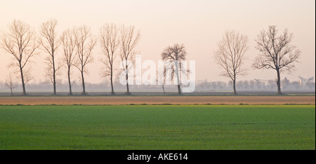 Poplar trees in a winter agrarian landscape near Gossolengo Valtrebbia Italy - Stock Photo