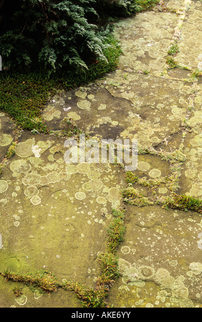 York Stone paving slabs with lichen and moss - Stock Photo